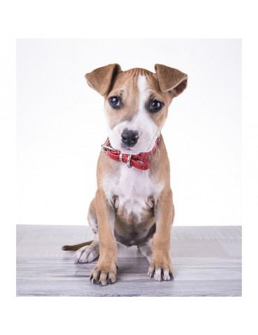 DG01 Leather Dog Collar