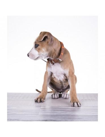 DG04 Deri Köpek Tasması