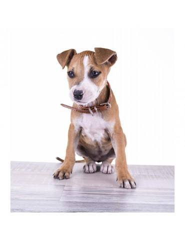 DG04 Leather Dog Collar